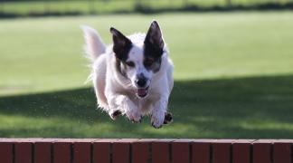 Welfare Dogs